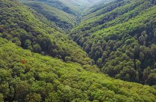 Papuk Nature Park's beech forest, one of many in Croatia