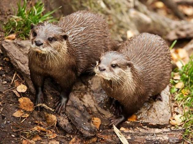 Otters posing for their close-up