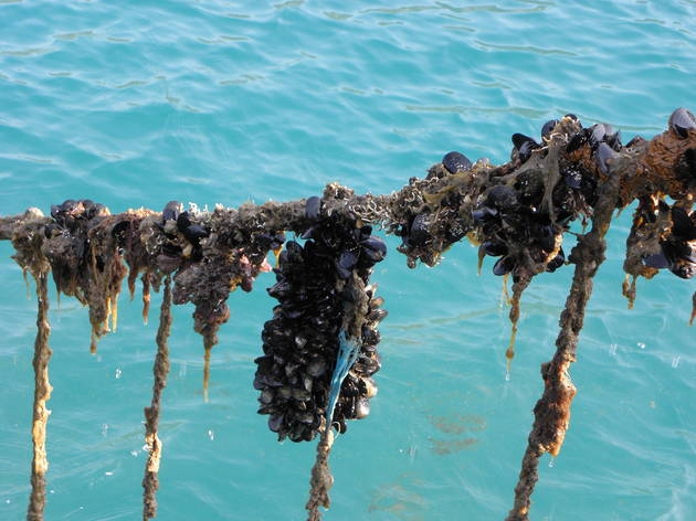 Mussels above the sea