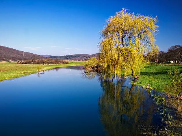 A willow tree dips into the Gacka river