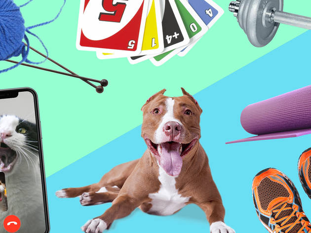 Collage of knitting, dogs, uno, running shoes