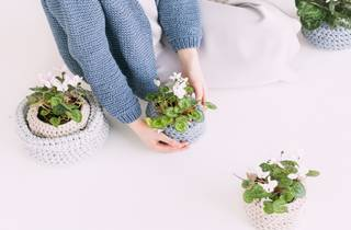 Plants and hands