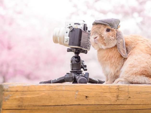 Mumitan, Instagram rabbit, camera