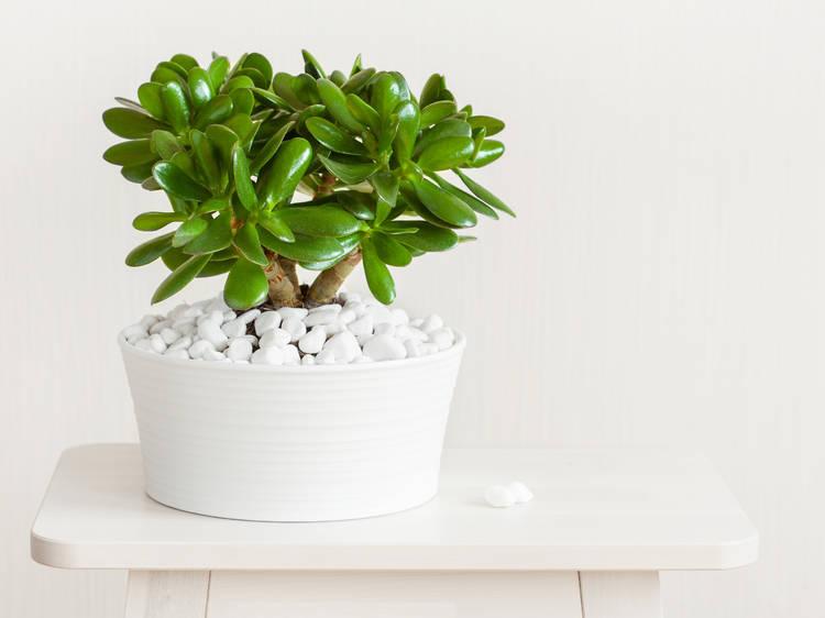 Las plantas más adecuadas