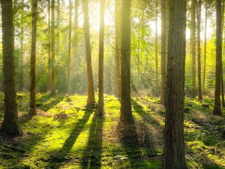 Green Talks: falar de sustentabilidade em tempo de quarentena