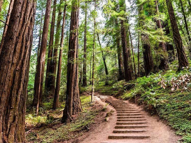 朝:カリフォルニアの森でハイキング