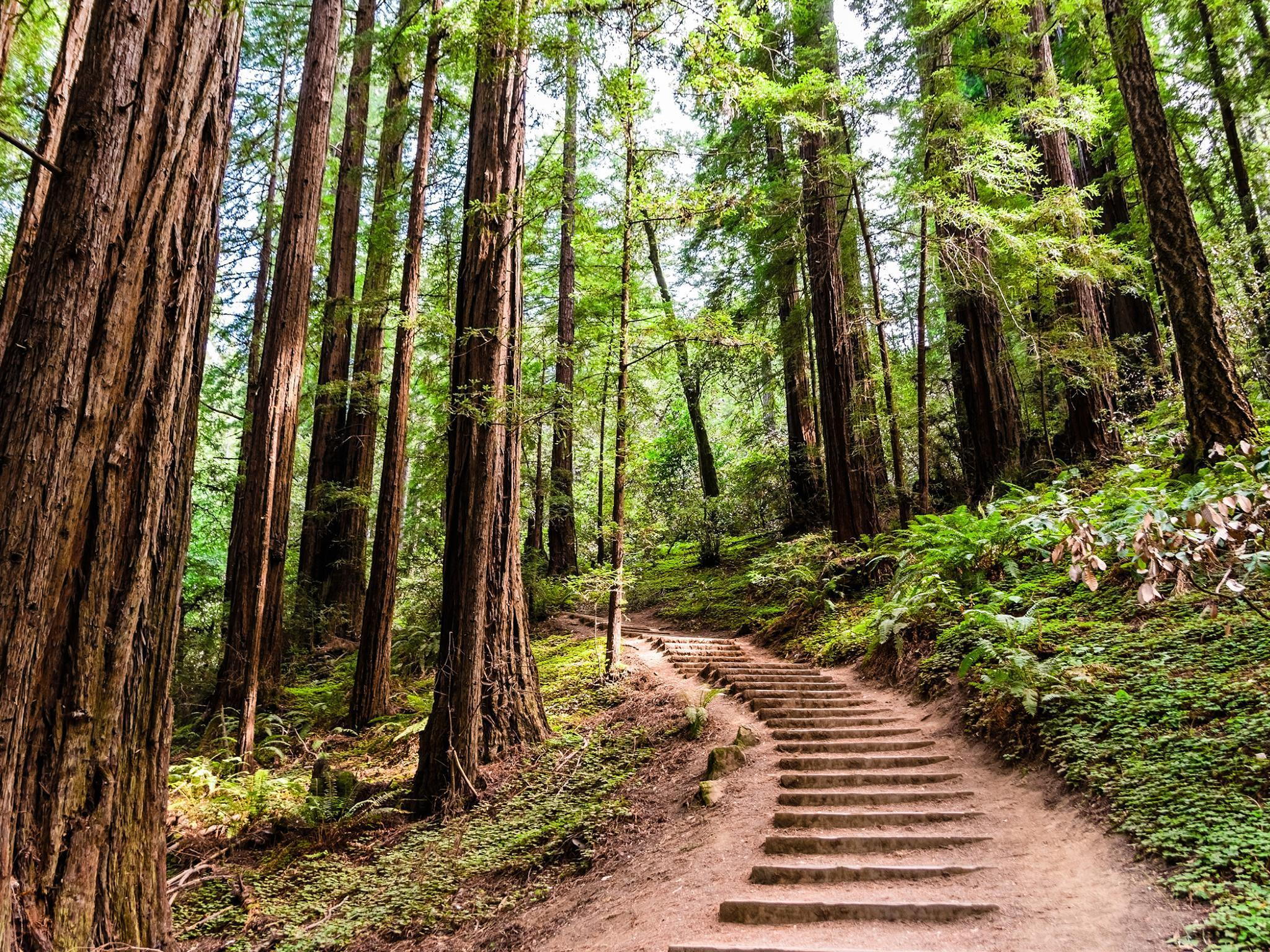 Californian redwood forests