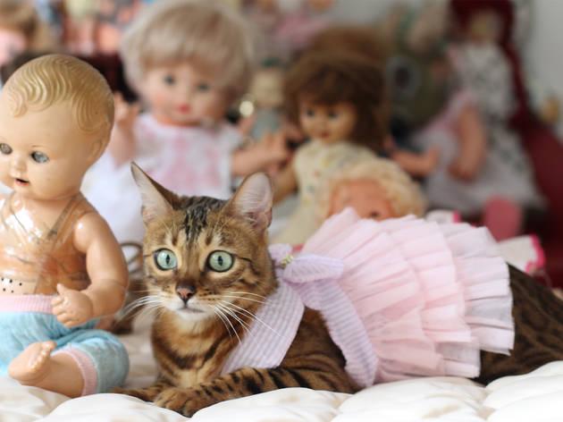 Gato, Consiente a tu mascota