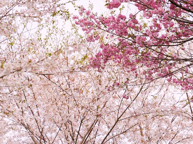 Photo:keisuke Tanigawa