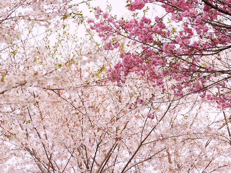 午後:仙台でピクニック