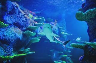 A shark swims through an aquarium