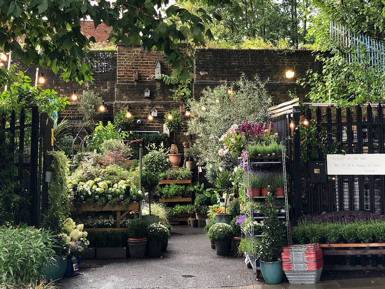 London's local garden centres delivering plants