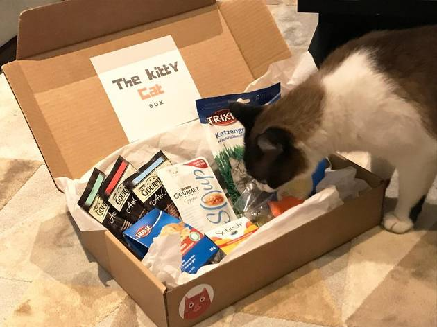 the kitty cat box