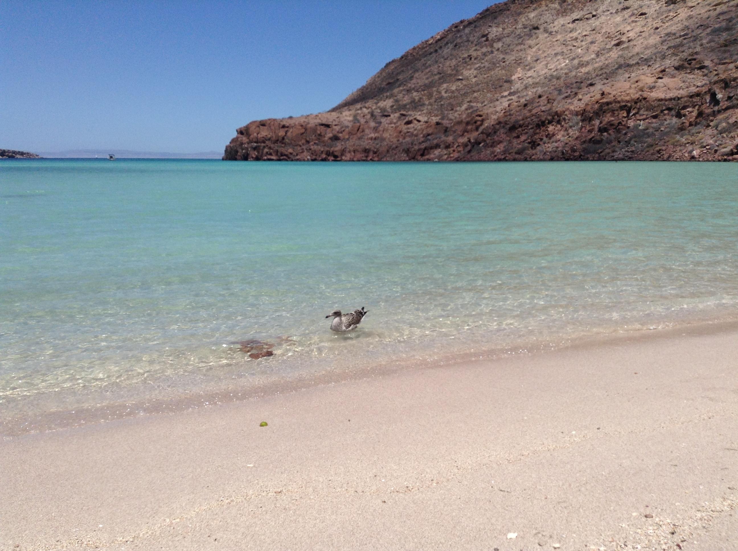 Playas en La Paz Baja California Sur, México