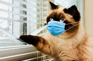 london cat stuck at home coronavirus