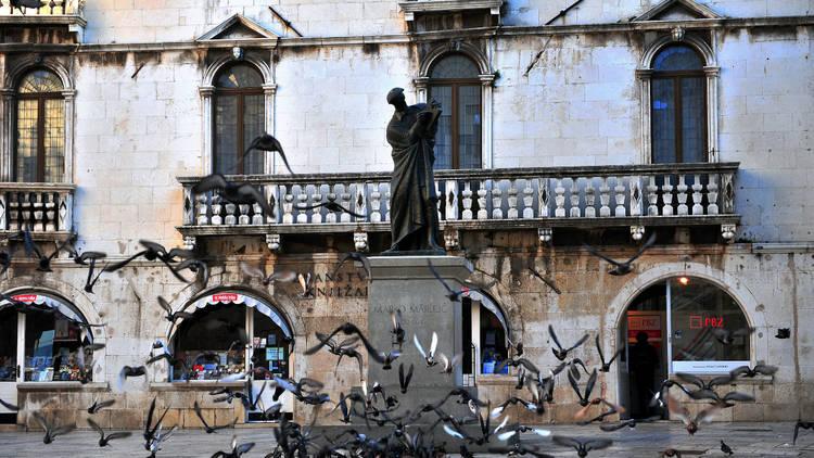 Pigeons in the square of Split, Croatia