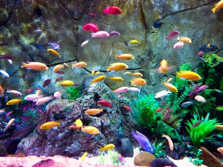 Tune in to the Shedd Aquarium's live cam