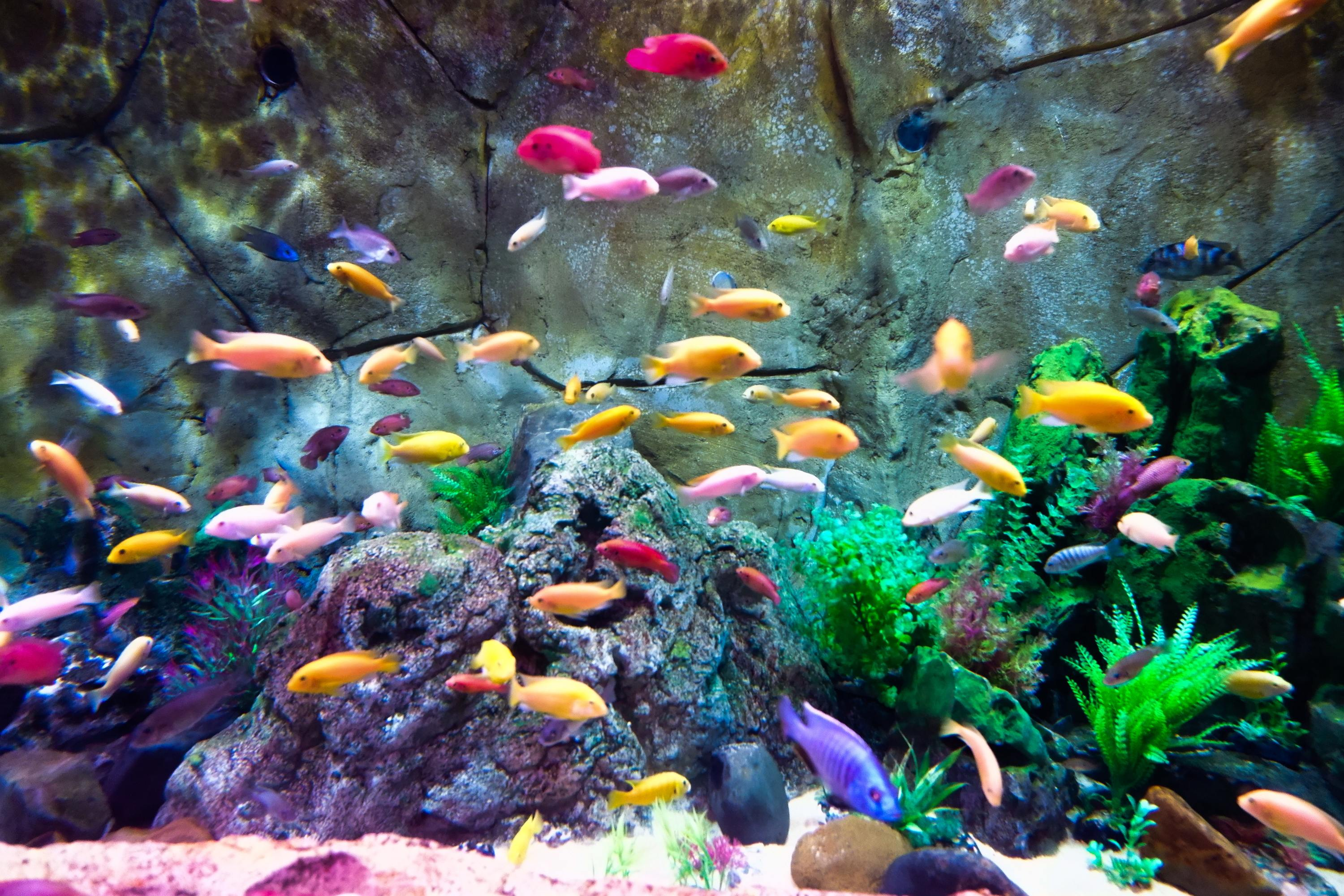 This aquarium's live cam is relaxing and mesmerizing