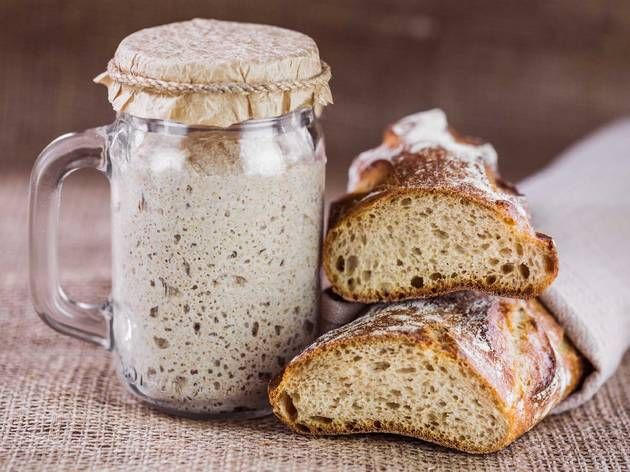 sourdough bread starter