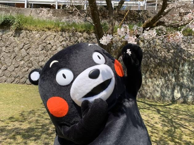 kumamon mascot