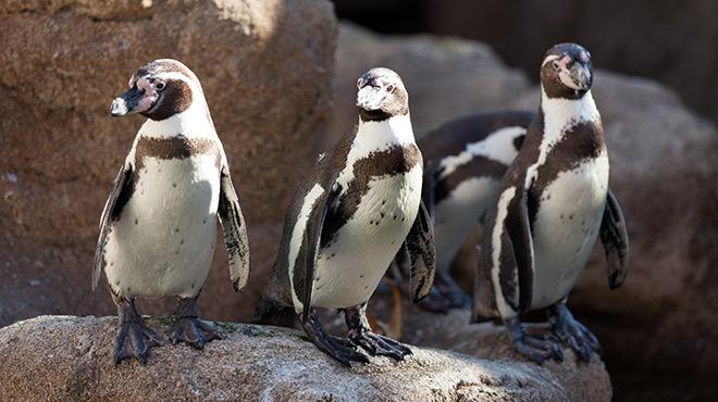 Zoo life around the world