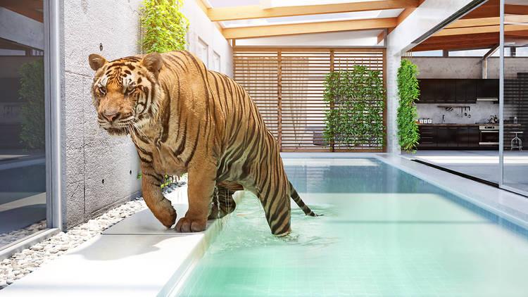 Tigre Animal 3D