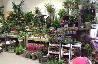 Wah King Garden Arts garden centre