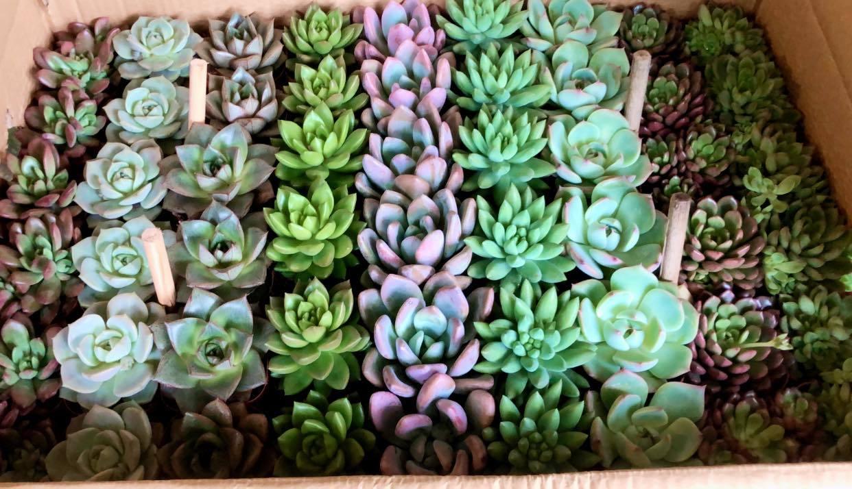 Garden Plus plant