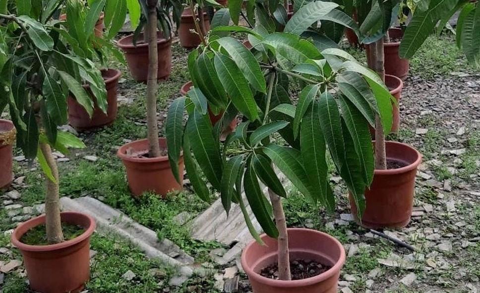 Keren's Garden plant