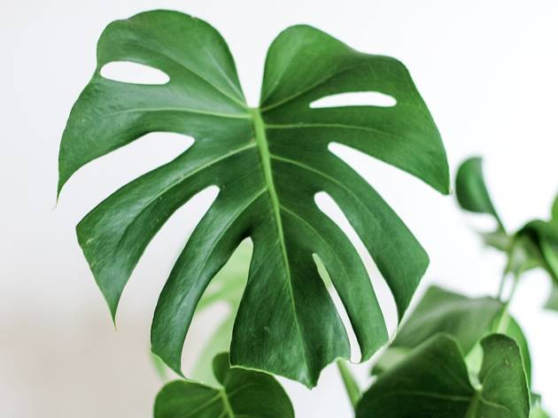 The best indoor plant delivery services in Hong Kong
