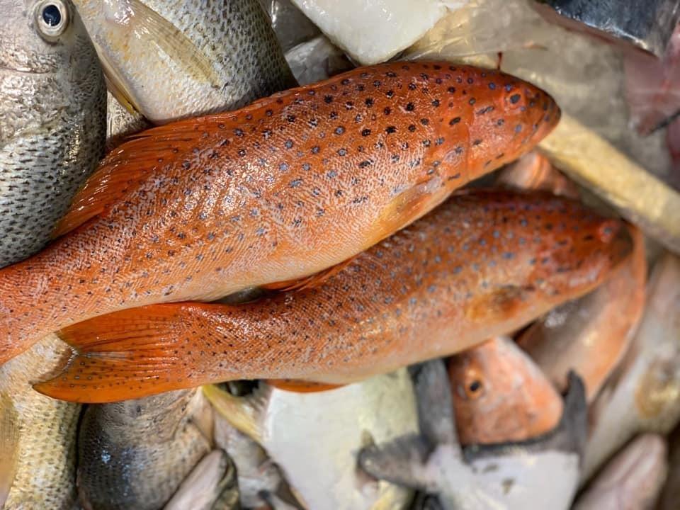 Fresh Seafood Lobang – Pasar United