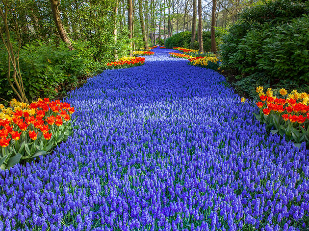 Take a virtual tour of the Netherlands' most spectacular tulip garden