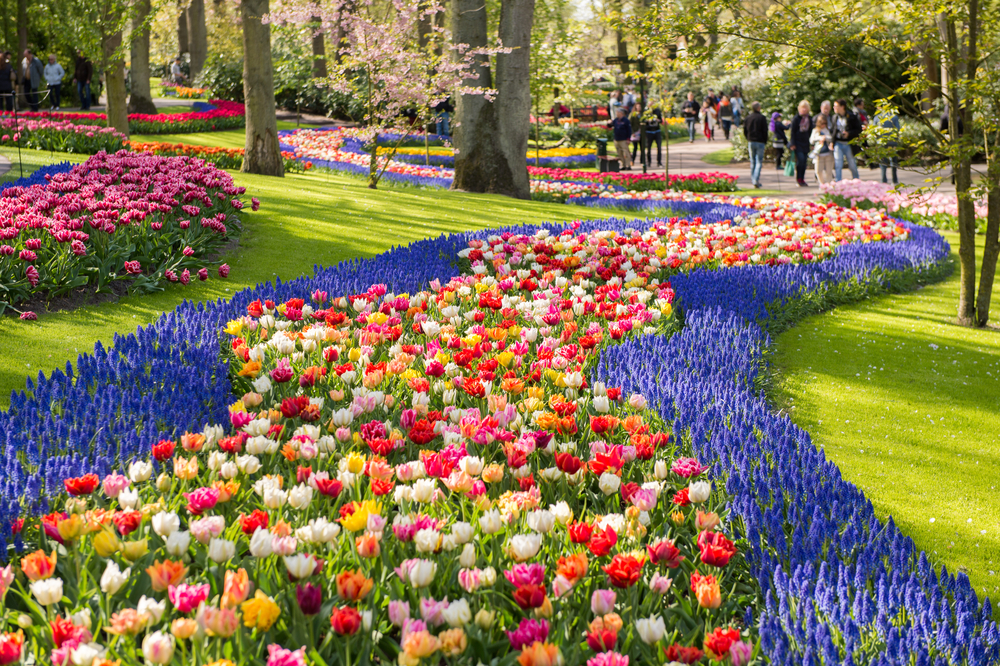 Escápate a los campos holandeses de tulipanes con estos recorridos virtuales