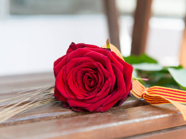 Rosa de Sant Jordi a casa