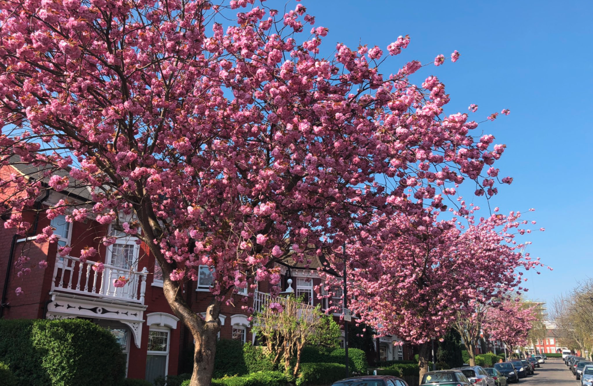 Londoners reveal the best blossom they've seen during lockdown