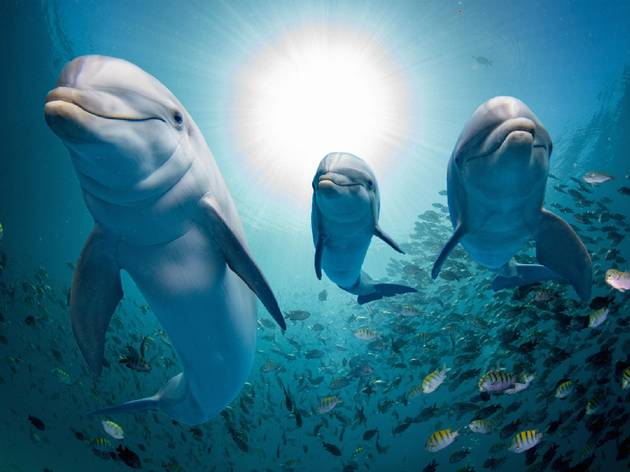 A family of dolphins