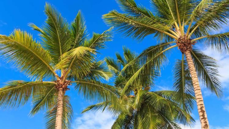 Palm trees - Miami