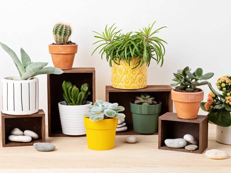As melhores plantas para ter em casa