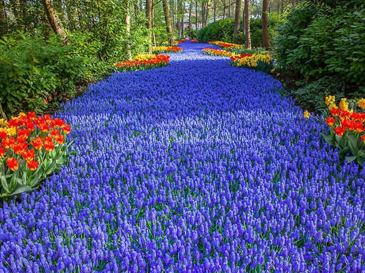 Découvrez le jardin de tulipes le plus spectaculaire des Pays-Bas !