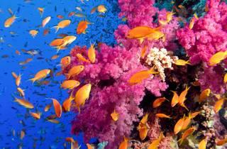 Coral reef Hawaii