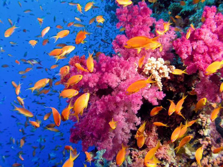 A vida marinha no Havai prospera com ausência humana