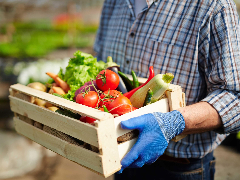 farm, csa box, produce, vegetables, vegetable, veggies