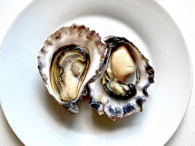 Mimosa Rock Oysters