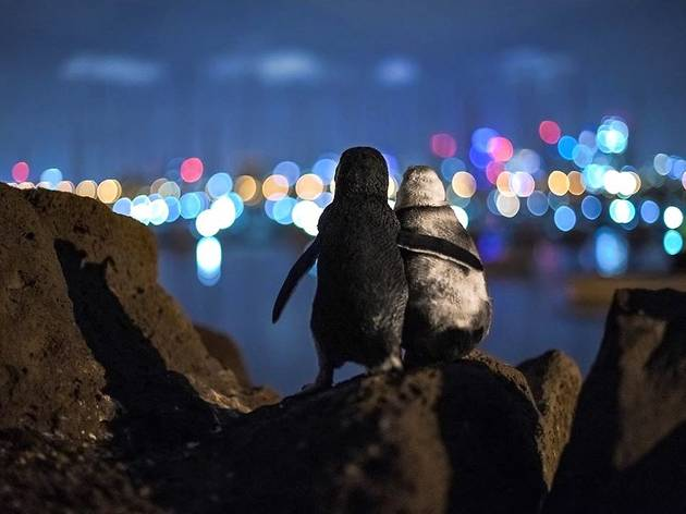 Penguins hugging while looking at city lights