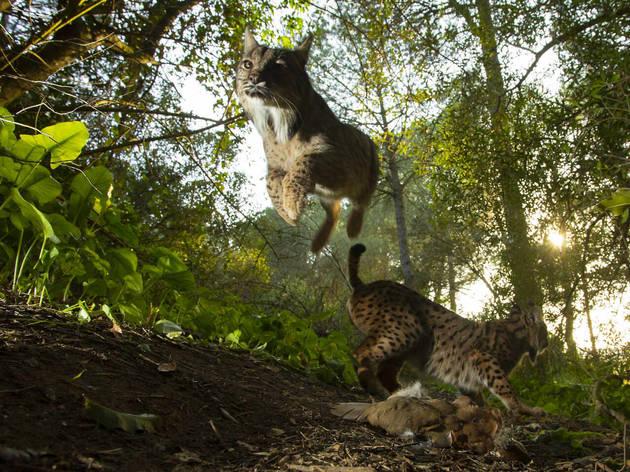 'The King of Doñana' (Antonio Pizarro Rodriguez, World Press Photo 2020, Nature, Singles, 3rd Prize)