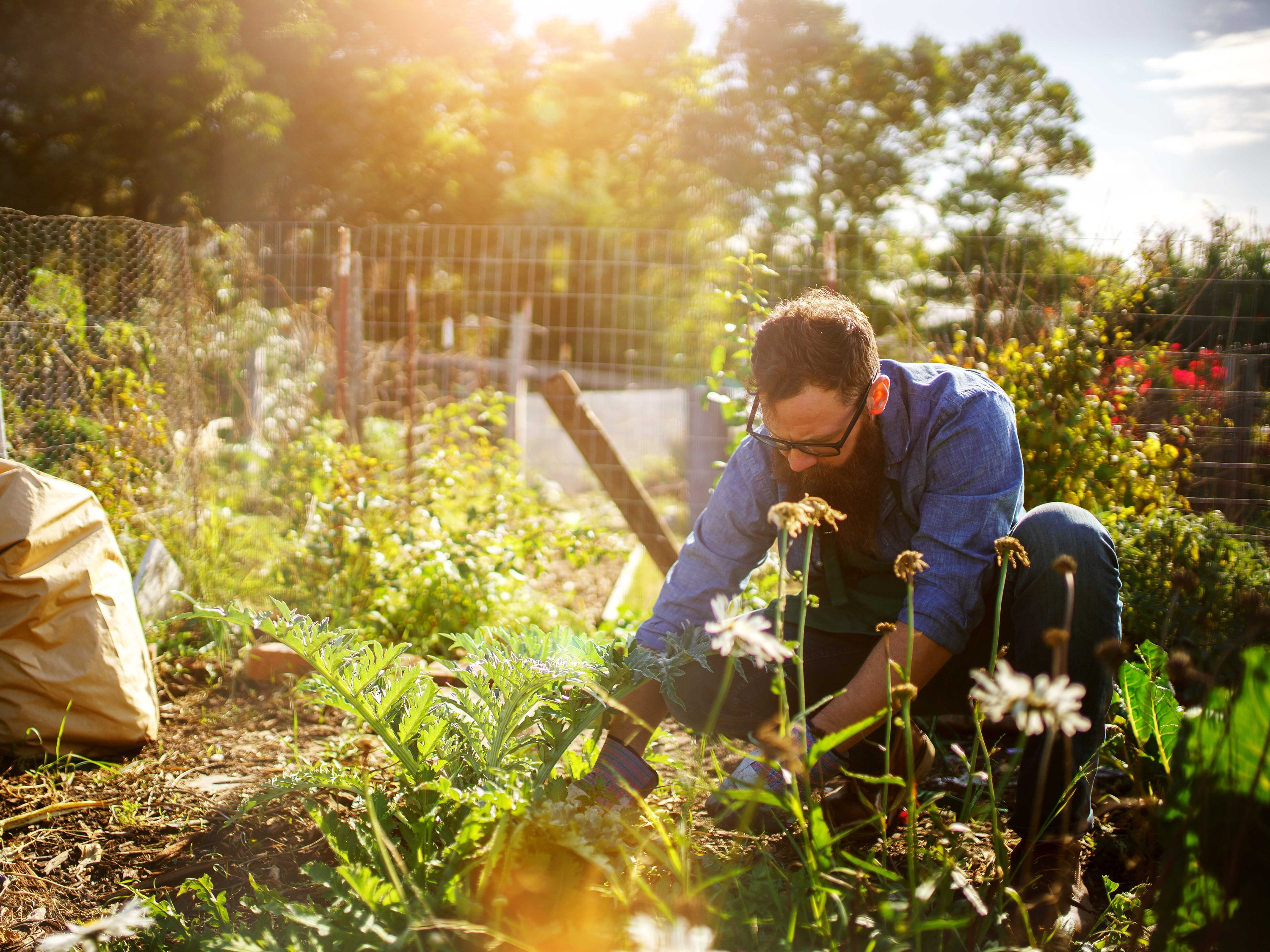 Want to grow your own modern-day Victory Garden?