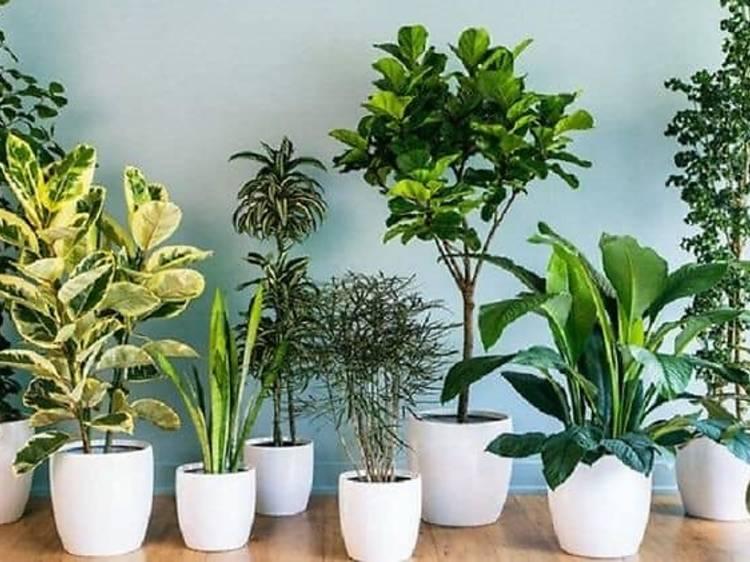 Plants to Go