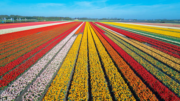 The ultimate guide to Netherlands