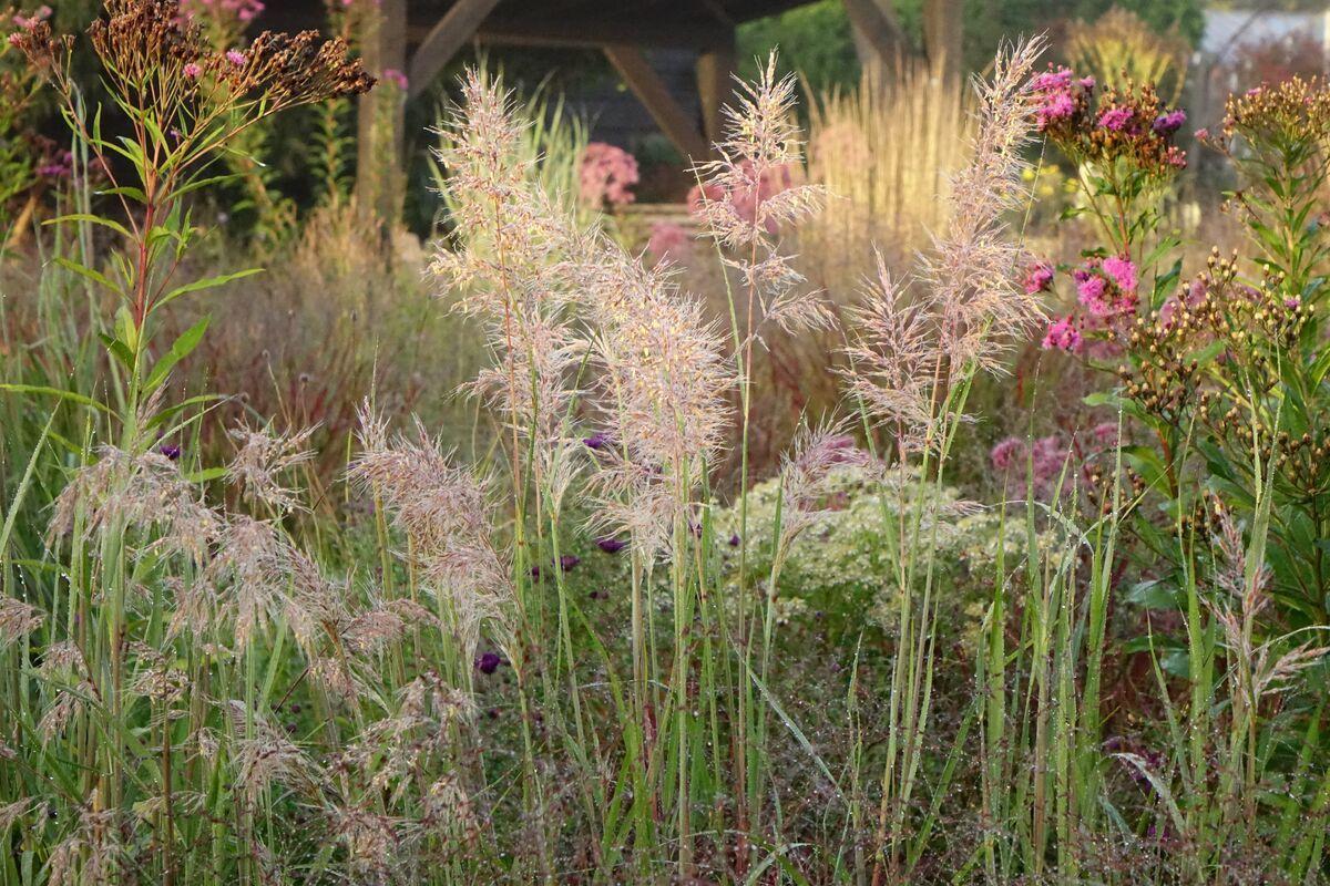 Five Seasons The Gardens Of Piet Oudolf Screening Online