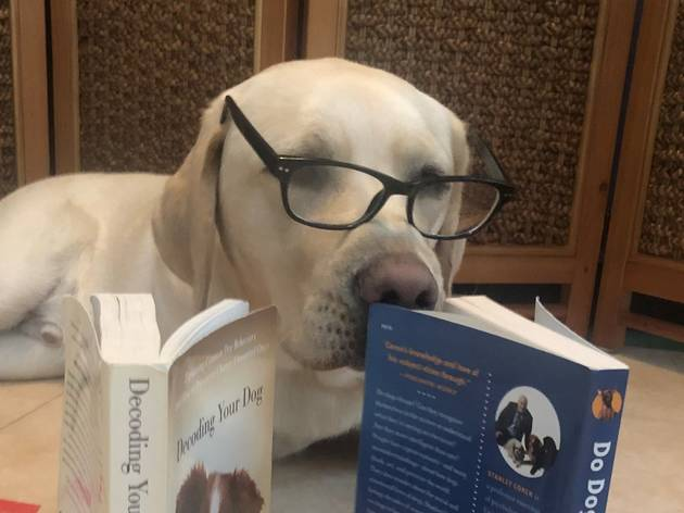 From Tales to Paws: Online Reading Program